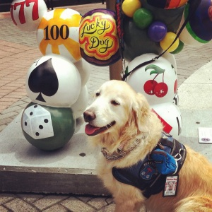 Of Persons With Disabilities Partnered With Service Dogs